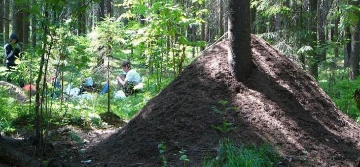 Практикум по методам экологических исследований